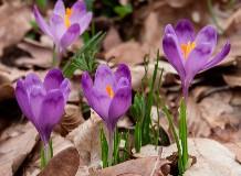 Virágzásváró túra a Szatmárban