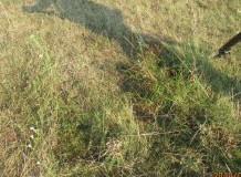 2.rész - Cikksorozat a hagyományos pásztoroló legeltetésről