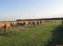 5.rész - Cikksorozat a hagyományos pásztoroló legeltetésről - A mezsgyézés