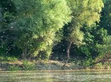 A Tisza-tónál is elindult a rajzás