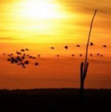 Daruvonulás a Hortobágyon - Vezetett túrák a darvak nyomában 2020