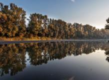 Erdők a Felső-Tisza-vidéken