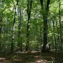 Erdők és fás legelők természetvédelmi kezelése