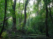"""""""Mesél az erdő"""" alkotópályázat"""