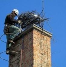 Special stork nest frame