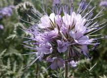 Természeti adottságokhoz igazodó tájhasználat kialakítása, a beporzó rovarközösségek segítésével
