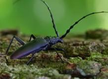 Védett és ritka bogarak felmérése